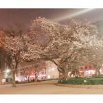 (久米川 恵美子)春♪
